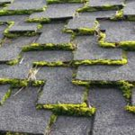 Algae-Moss-Shingles